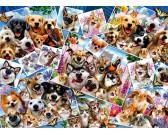 Puzzle Zwierzęce selfie