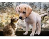 Puzzle Kotek i szczeniak