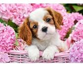 Puzzle Pies w różowych kwiatach - PUZZLE DLA DZIECI