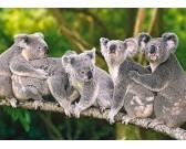 Puzzle Rodzinka misiów koala - PUZZLE DLA DZIECI