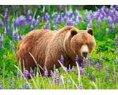 Puzzle Niedźwiedź na łące - PUZZLE DLA DZIECI