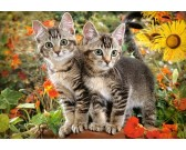 Puzzle Dwa koty
