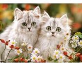 Puzzle Kocięta perskie - PUZZLE DLA DZIECI