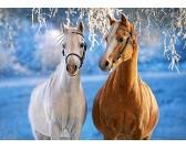 Puzzle Konie w zimie - PUZZLE DLA DZIECI