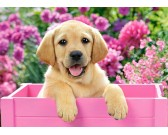 Puzzle Labrador w różowym pudełku - PUZZLE DLA DZIECI