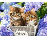 Puzzle Słodkie kociaki - PUZZLE DLA DZIECI