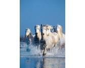 Puzzle Konie w wodzie