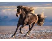Puzzle Wolny koń