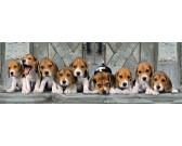 Puzzle Beagle - PUZZLE PANORAMICZNE