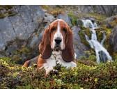 Puzzle Basset hound