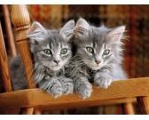 Puzzle Pręgowane kocięta