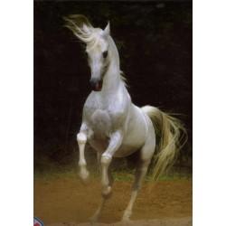 Puzzle Biały koń