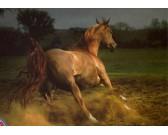 Puzzle Gniady koń