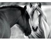 Puzzle Czarno-białe konie