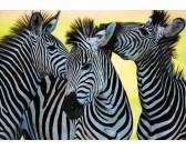Puzzle Trzy zebry