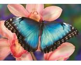 Puzzle Motyl na orchidei