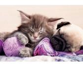 Puzzle Śpiący kotek
