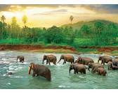 Puzzle Słonie w rzece