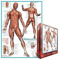 Puzzle Mięśnie