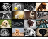 Puzzle Kolaż - psy