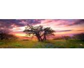 Puzzle Drzewo Oak - PUZZLE PANORAMICZNE
