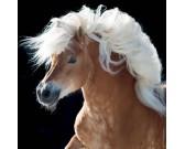 Puzzle Koń - MINI PUZZLE