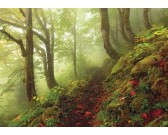 Puzzle Leśna droga