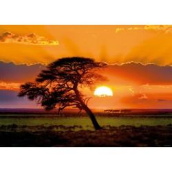 Puzzle Drzewo w zachodzącym słońcu