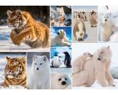 Puzzle Zwierzęta arktyczne