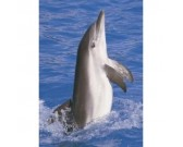 Puzzle Delfin - PUZZLE DLA DZIECI