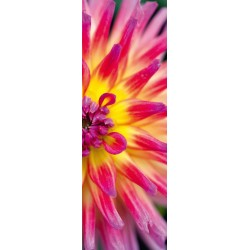 Puzzle Barwny kwiat kaktusa - PUZZLE WERTYKALNE