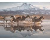 Puzzle Konie w Kapadocji