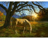 Puzzle Wypas koni