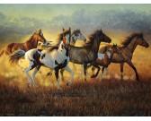 Puzzle Stado dzikich koni