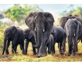 Puzzle Słonie afrykańskie