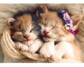 Puzzle Śpiące kocięta